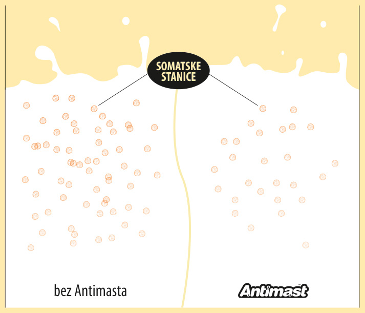 antimast