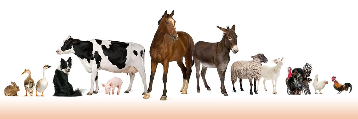bg-animals